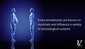 7WTBuc0ERPiKRo8Nm4ot_what-are-endocannabinoids