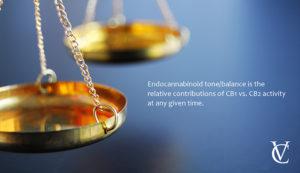 LpsNosoNQ3GcEcekcp5Q_endocannabinoid-balance