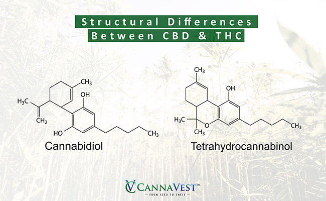 CBD structural difference
